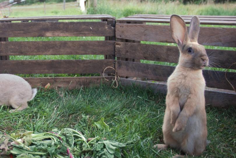 sogs5_bunnies